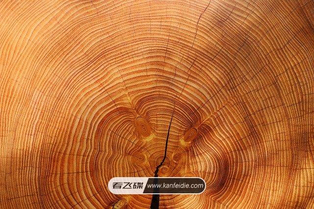 树木横截面年轮4K图片素材下载