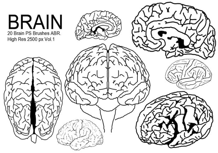 大脑结构简笔线条PS笔刷预设打包下载